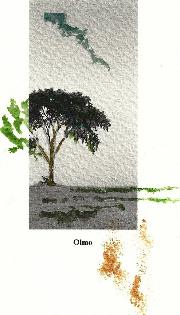 1 Olmo