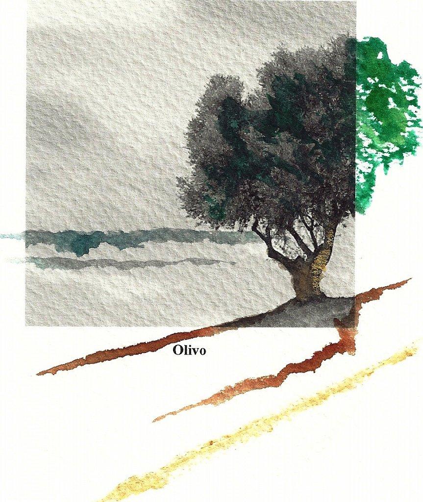 5 Olivo