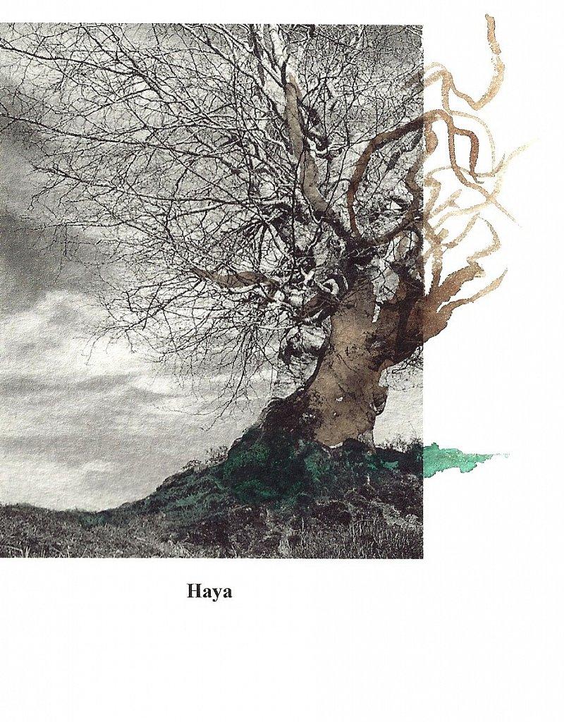 Los árboles solitarios