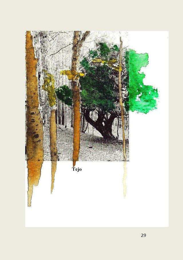 Los-arboles-solitarios-29.jpg